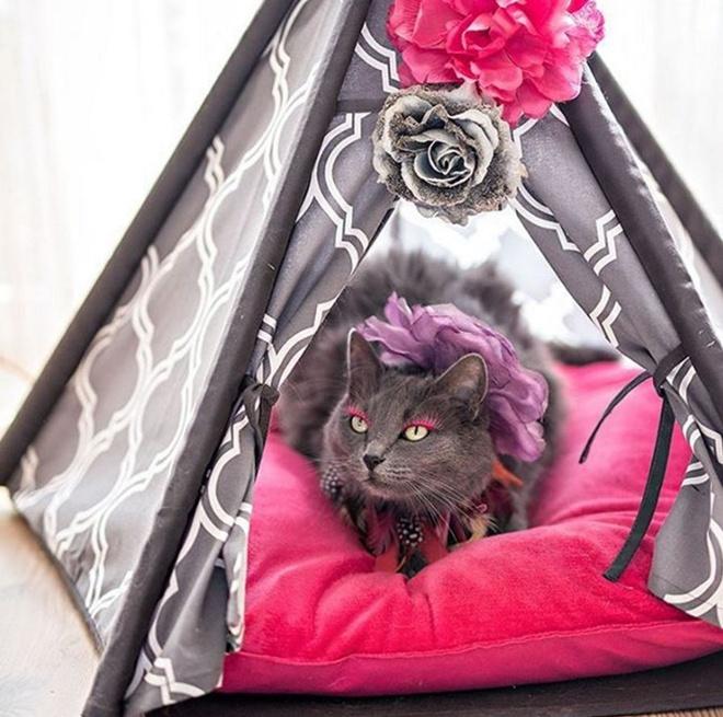Як кішка з кольоровими віями стала королевою моди - фото 3