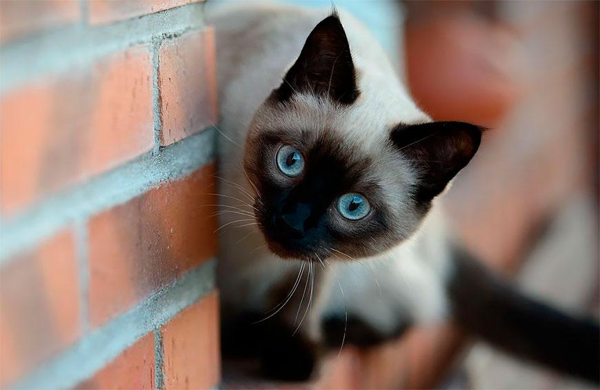 Котофілія у XIX столітті: Як раніше обожнювали котиків - фото 2