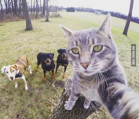 Як кіт зробив селфі із трьома собаками - фото 1