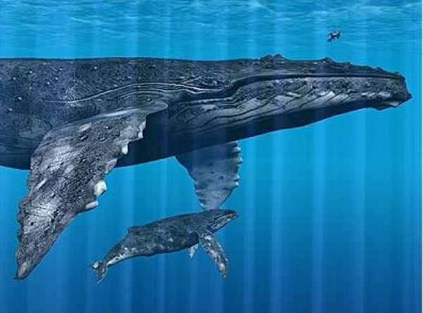 ТОП-20 кумедних та моторошних випадків з китами та делфінами - фото 3