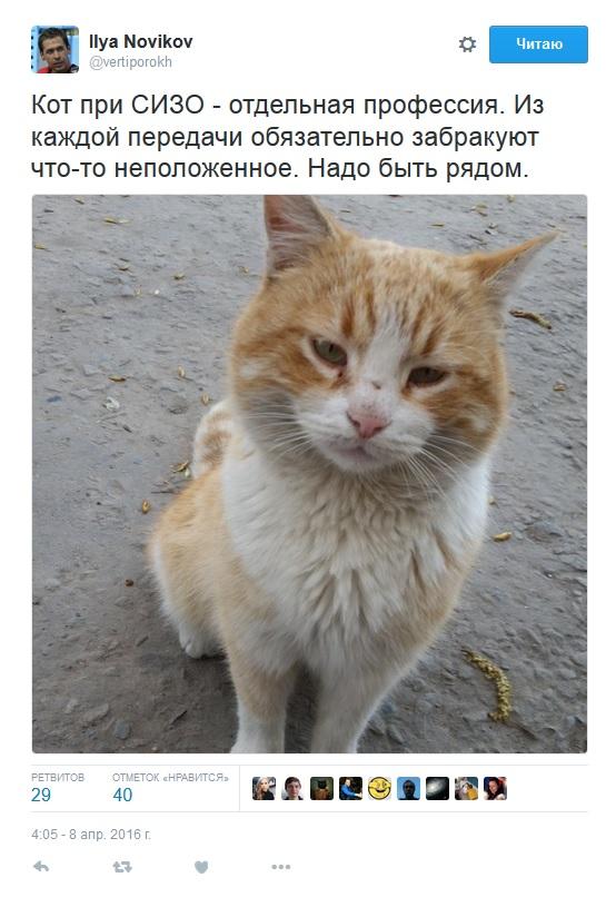 Адвокат Савченко показав хитрого кота під СІЗО (ФОТО) - фото 1
