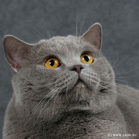 Котофілія у XIX столітті: Як раніше обожнювали котиків - фото 3