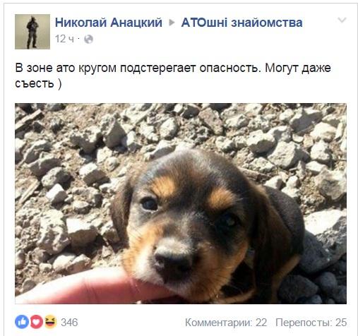 Чим займаються на Донбасі найкращі друзі бійців АТО-5 - фото 12