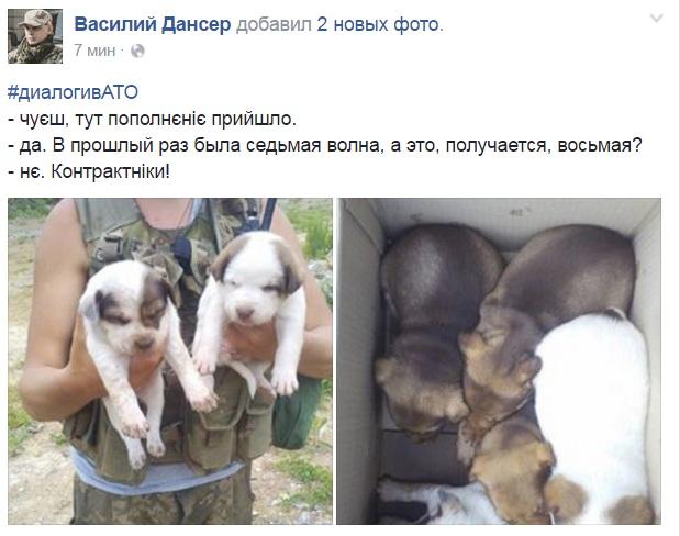 Чим займаються на Донбасі найкращі друзі бійців АТО-4 - фото 3