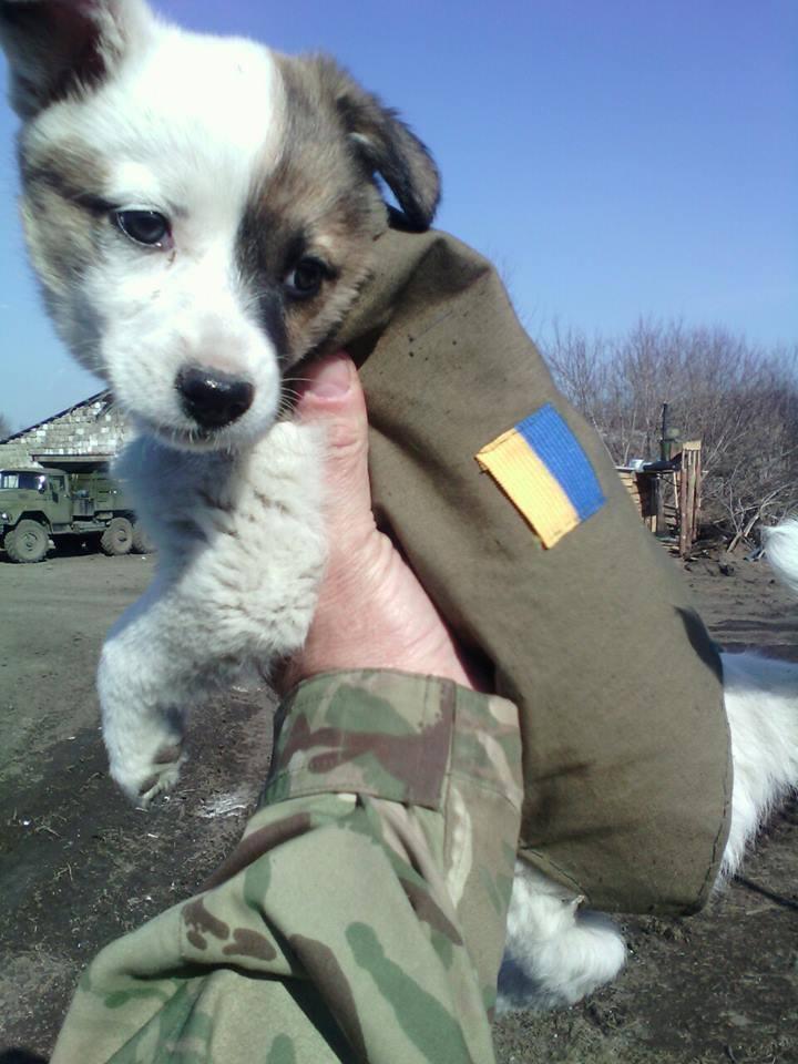 Чим займаються на Донбасі найкращі друзі бійців АТО - 2 - фото 13