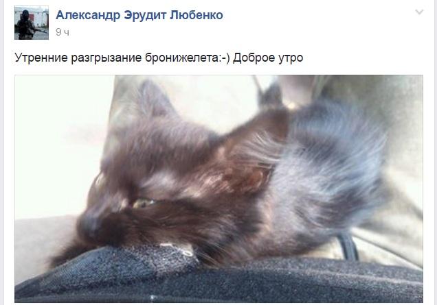 За що котам в АТО треба поставити пам'ятник-7 - фото 16