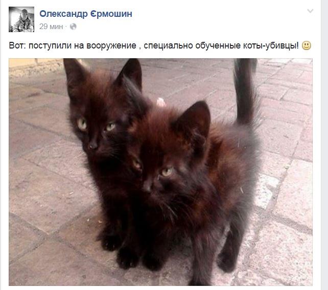 За що в АТО треба поставити пам'ятник котам і... гусям - фото 4
