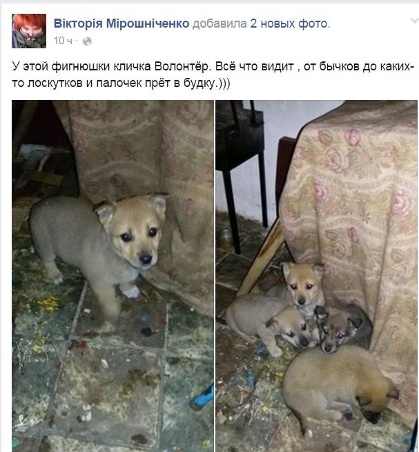 Чим займаються на Донбасі найкращі друзі бійців АТО - фото 12
