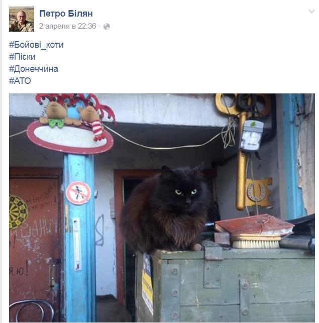 За що котам в АТО треба поставити пам'ятник-5 - фото 14
