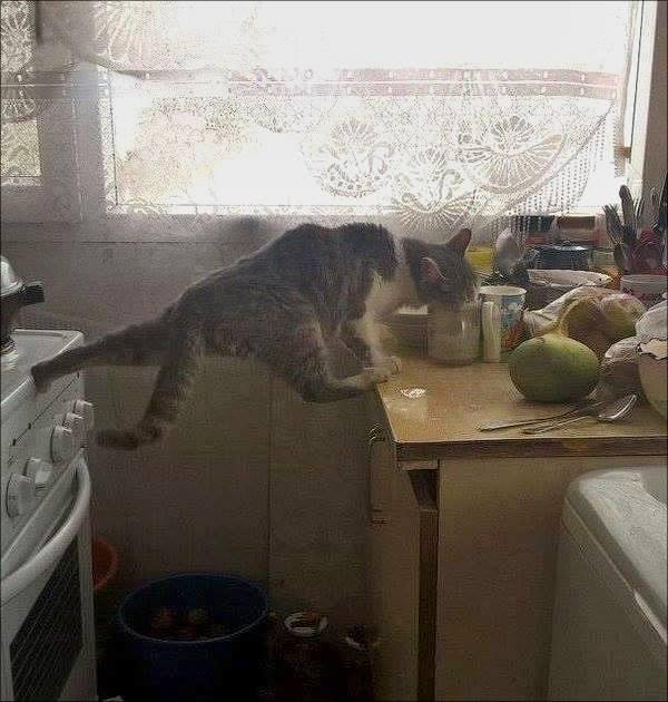 """Як кіт сів на шпагат і """"лайкнув"""" молоко - фото 1"""