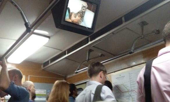 Хакери запустили котів у вагони київського метро (ФОТО) - фото 1