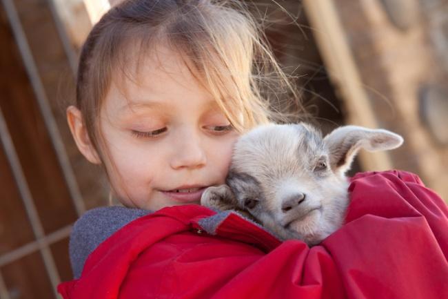Американські фермери шукають волонтерів, які обійматимуть козенят - фото 1