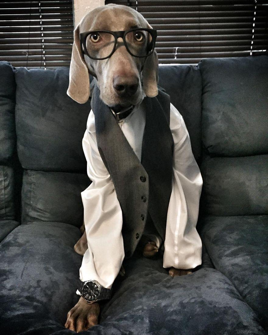 Як собака думає, що він людина - фото 8