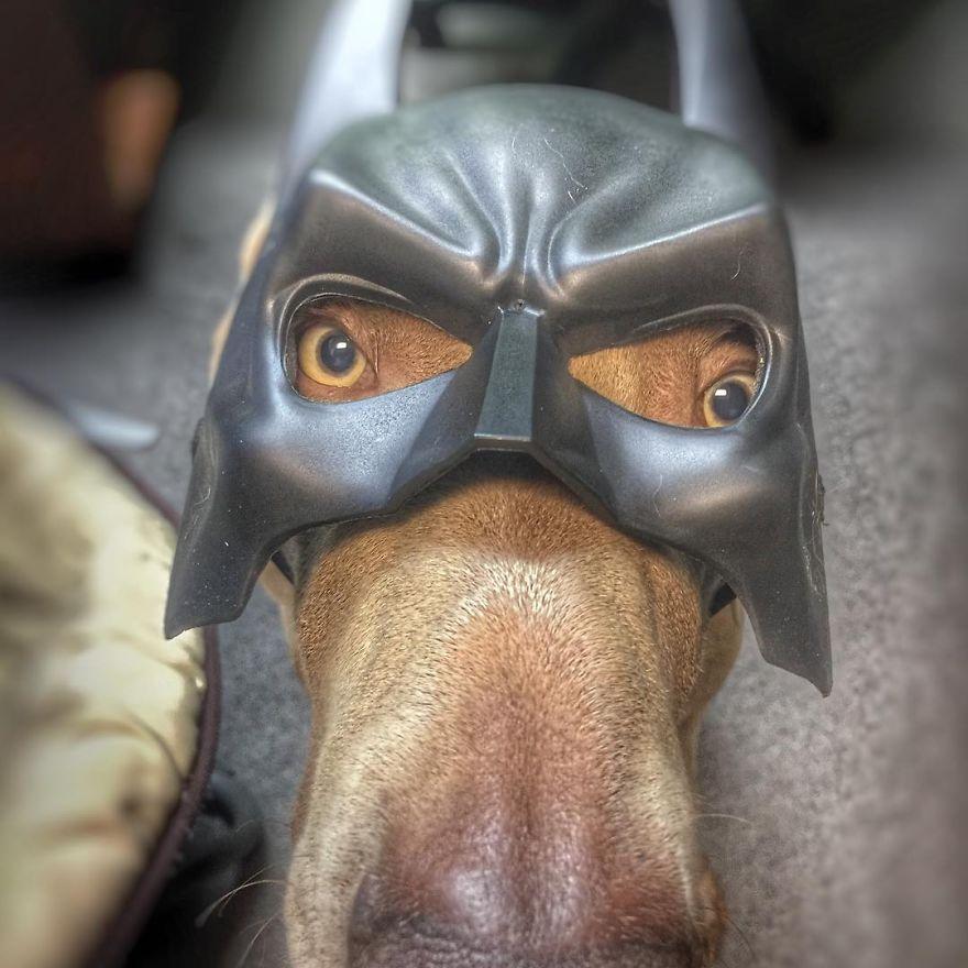 Як собака думає, що він людина - фото 5