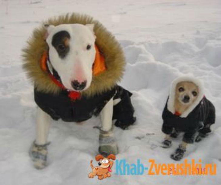 Холод собачий: ТОП-20 собак у зимовому одязі - фото 14
