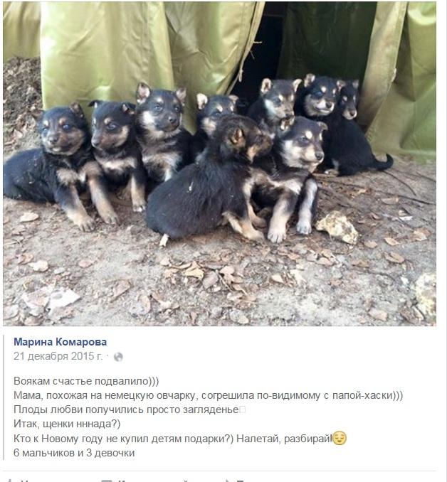 За що собакам в АТО треба поставити пам'ятник - фото 1