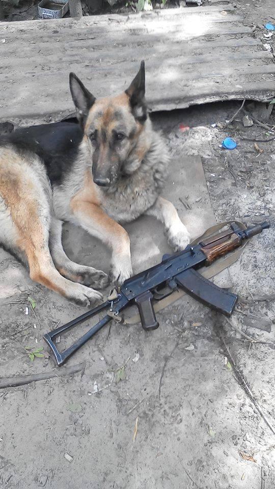 Чим займаються на Донбасі найкращі друзі бійців АТО - 2 - фото 10