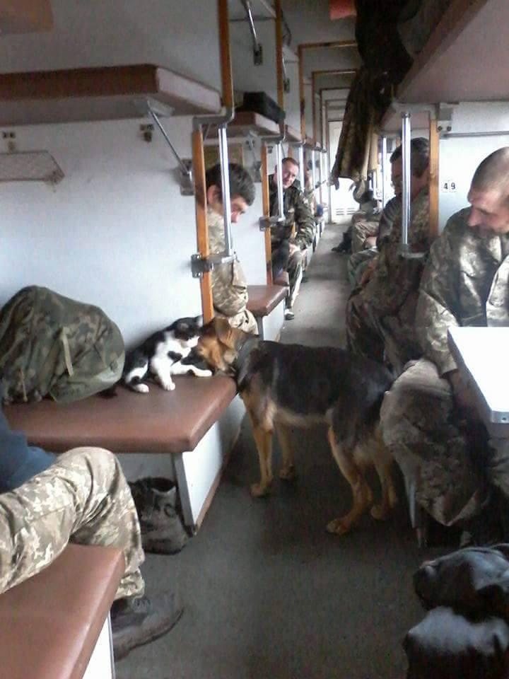 Як пухнастий Донбас розселяється Україною - фото 8