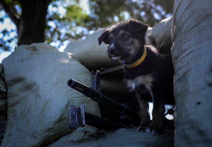 Чим займаються на Донбасі найкращі друзі бійців АТО - фото 8