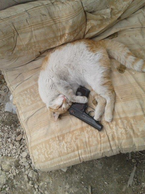 Мімішні бійці: Коти-кулеметники в АТО - фото 7