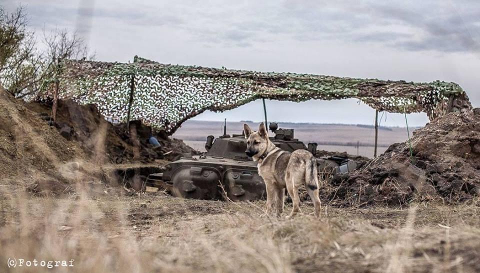 Чим займаються на Донбасі найкращі друзі бійців АТО - 2 - фото 7