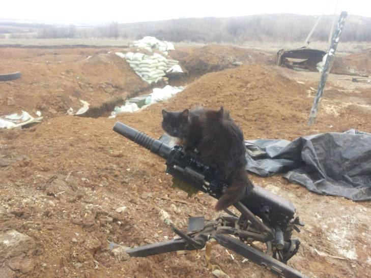 За що котам в АТО треба поставити пам'ятник-5 - фото 18
