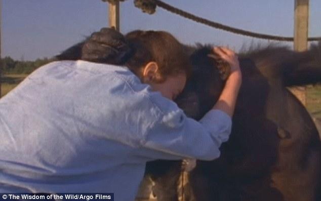 Як після 25-річної розлуки шимпанзе обіймали свою рятувальницю - фото 3