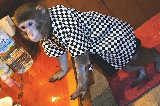 Символи-2016: найвідоміші та найприкольніші мавпи у світі - фото 8