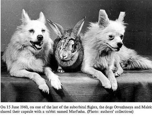 Долі жертв радянських космічних досліджень - фото 7