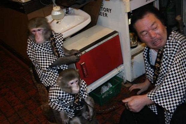 Символи-2016: найвідоміші та найприкольніші мавпи у світі - фото 9