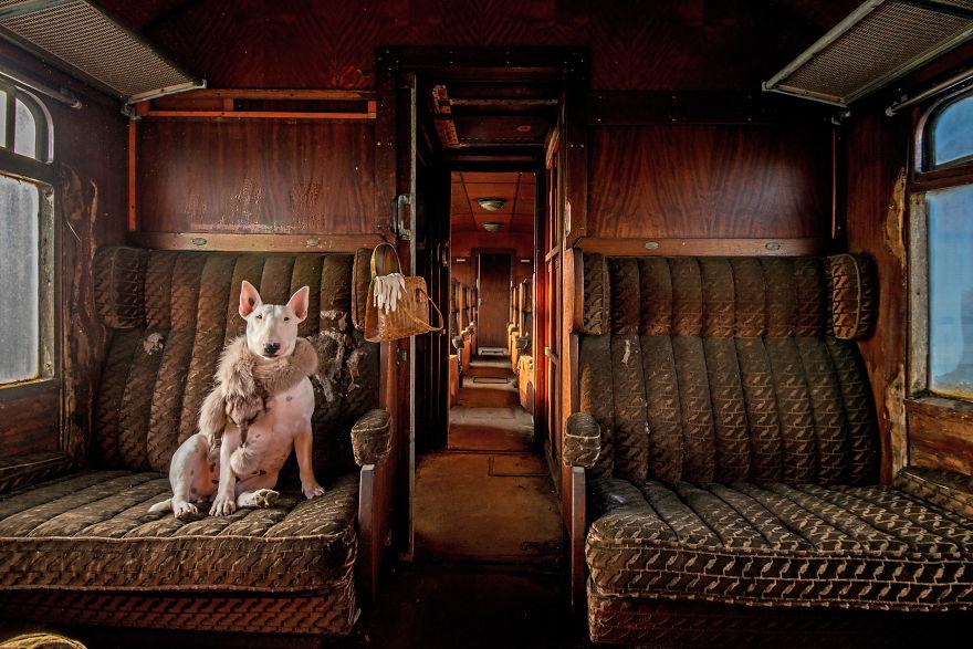 Як бультер'єр подорожує місцями, забутими людьми - фото 4