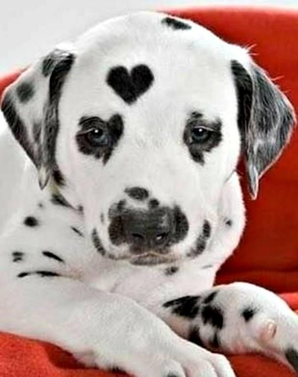 ТОП-7 симпатичних тварин з міткою-сердечком - фото 4