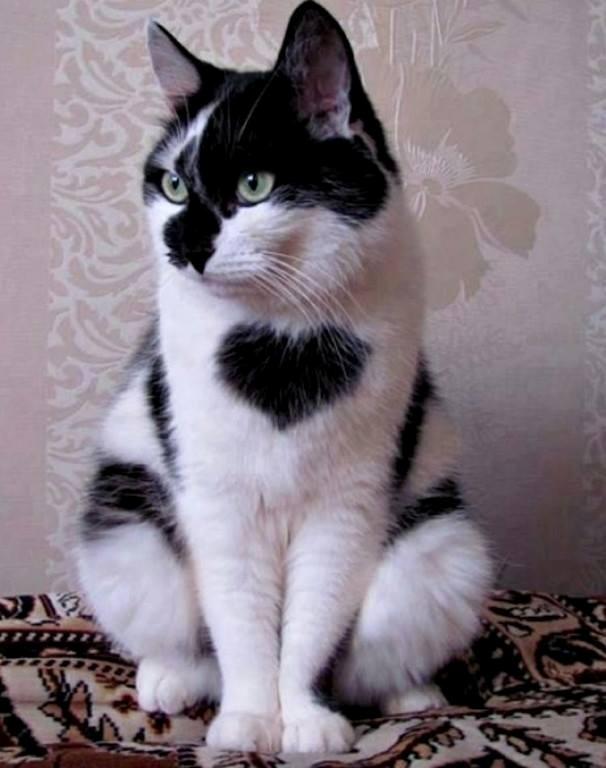 ТОП-7 симпатичних тварин з міткою-сердечком - фото 7