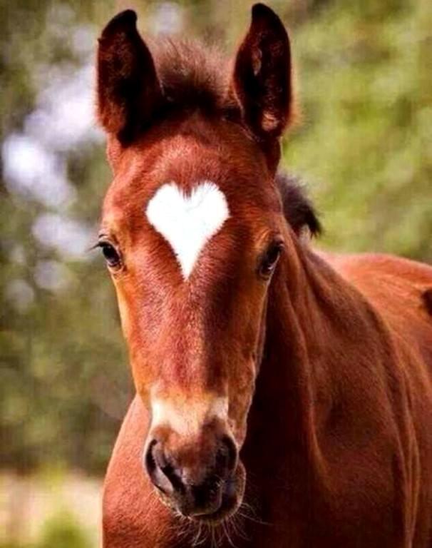 ТОП-7 симпатичних тварин з міткою-сердечком - фото 6