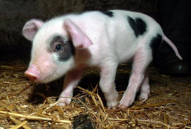 ТОП-7 симпатичних тварин з міткою-сердечком - фото 1