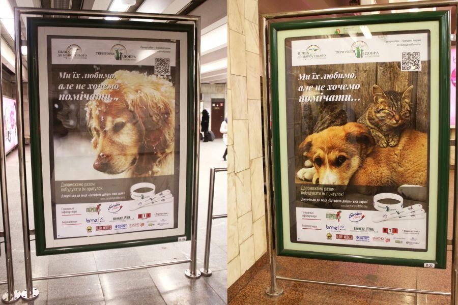 Як кіт з АТО, російські артисти та володарі браслетів рятують київських песиків - фото 7