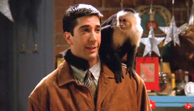 Символи-2016: найвідоміші та найприкольніші мавпи у світі - фото 11