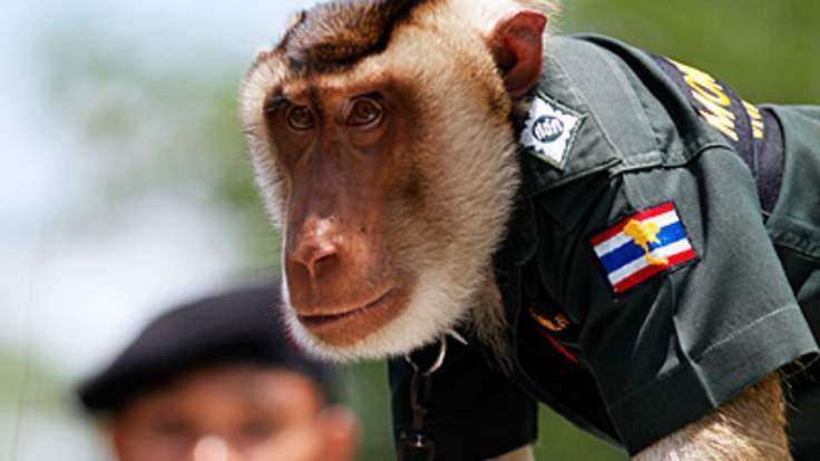 Символи-2016: найвідоміші та найприкольніші мавпи у світі - фото 10