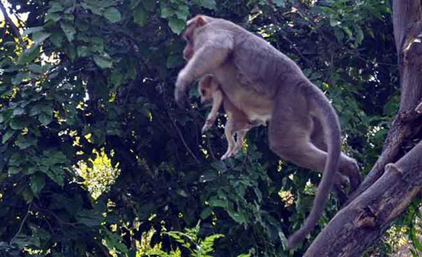 Як мавпа всиновила цуценя - фото 7