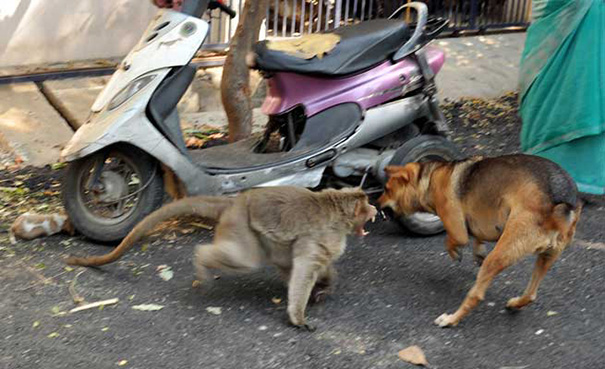 Як мавпа всиновила цуценя - фото 3