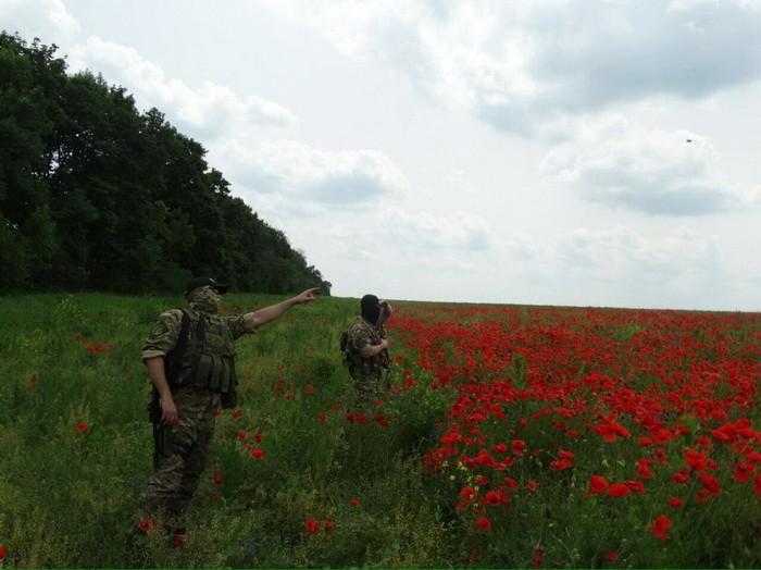 На Харківщині знайшли величезні макові плантації, з яких планували виготовити наркотики - фото 2