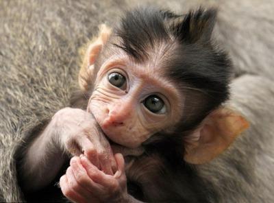 Символи-2016: найвідоміші та найприкольніші мавпи у світі - фото 4