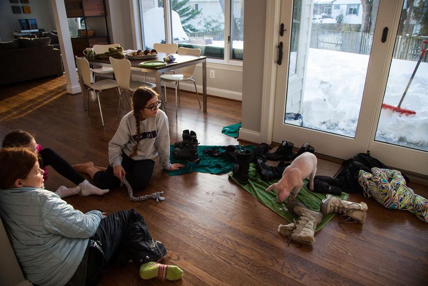 Як американці врятували життя поросяті, якого замело снігом  - фото 1