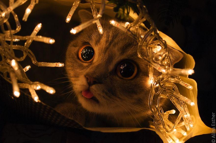 Різдвяна фотосесія кішки з Росії підірвала соцмережі  - фото 8