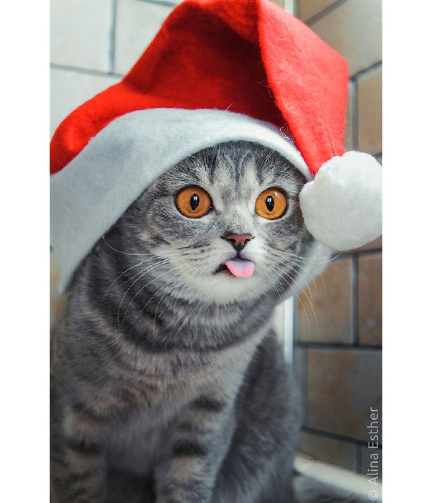 Різдвяна фотосесія кішки з Росії підірвала соцмережі  - фото 7