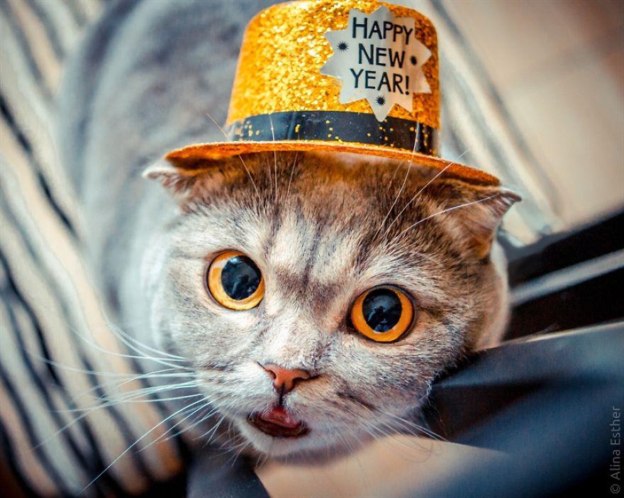 Різдвяна фотосесія кішки з Росії підірвала соцмережі  - фото 6