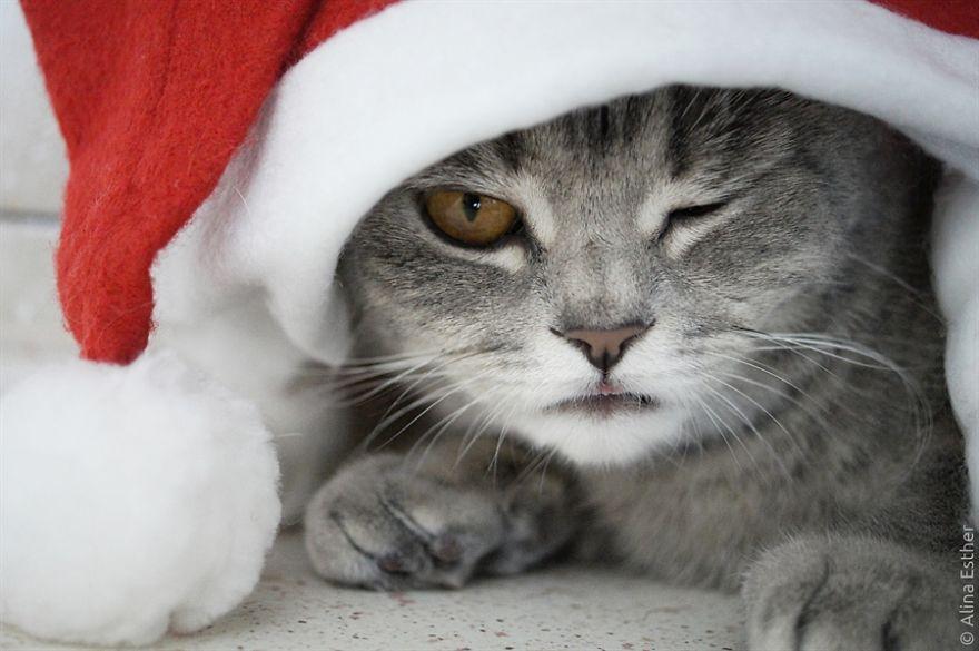 Різдвяна фотосесія кішки з Росії підірвала соцмережі  - фото 5