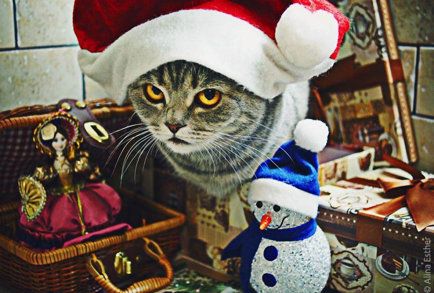 Різдвяна фотосесія кішки з Росії підірвала соцмережі  - фото 4