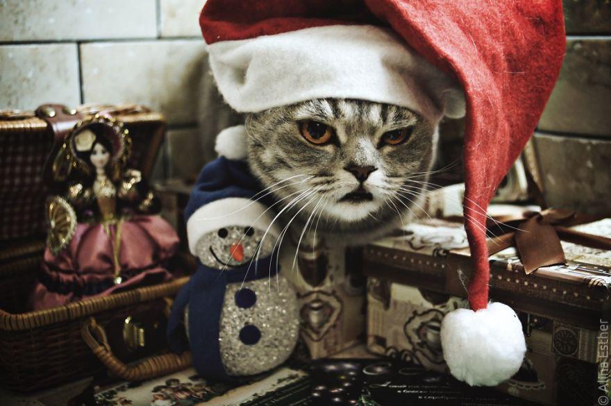 Різдвяна фотосесія кішки з Росії підірвала соцмережі  - фото 2