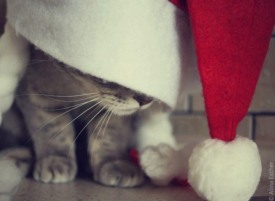 Різдвяна фотосесія кішки з Росії підірвала соцмережі  - фото 1
